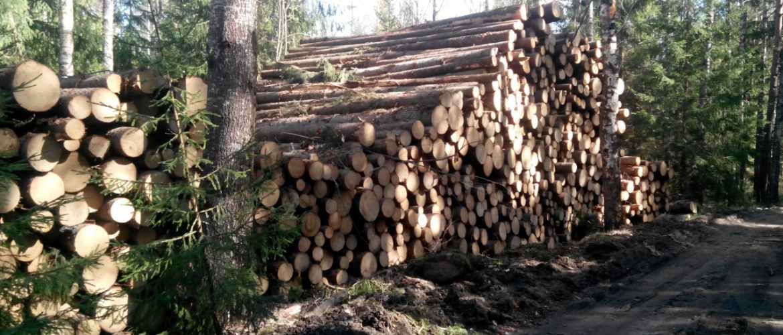 Вырубка леса закон